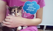 Отдам красивого котенка в добрые руки!!!