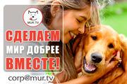 Животным помощь,  информационная поддержкаа